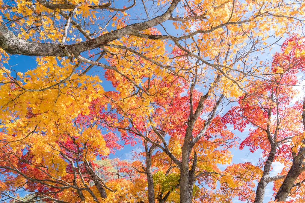 How to Prevent Leaves from Damaging Your Vehicle this Fall